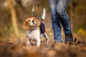 Things to Consider While Hiking With Your Dog