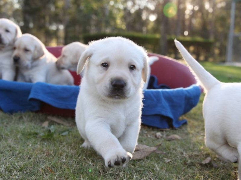 How to take care of Guide Dogs
