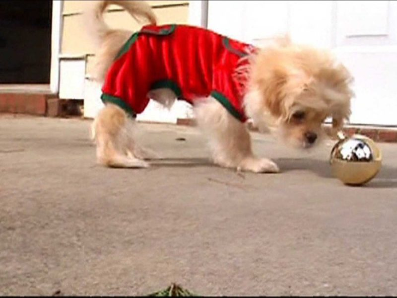 How To Avoid Holiday Hazards For Your Pets