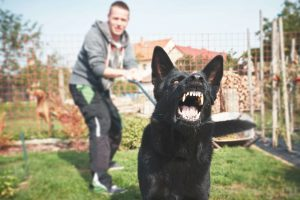 Find ways to stop your Pet Dog from Barking