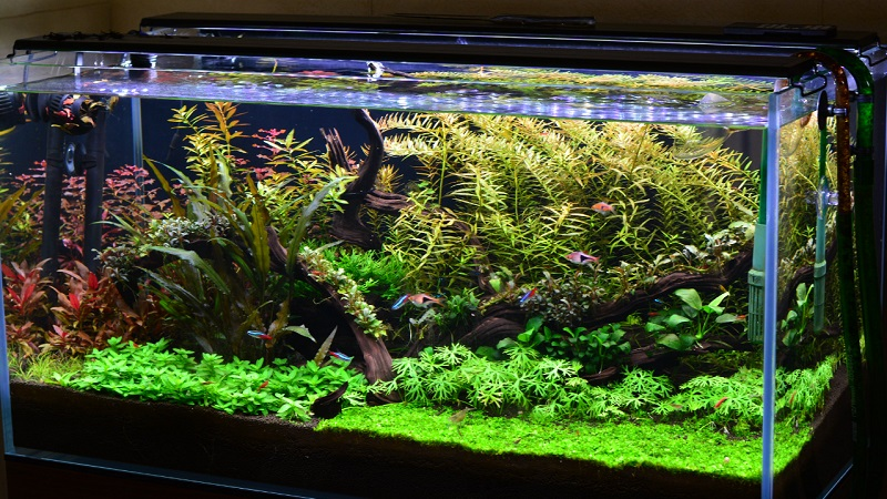 Things That You Need To Keep In Mind While Going For A 5 Gallon Aquarium At Home For Your Fish Keeping