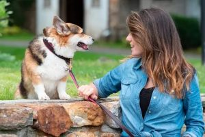 Personalized Leather Dog Collar For Your Furry Animals