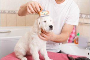 Wanting to take care of the pet mess without extra efforts? Try the most updated pet cleaning products