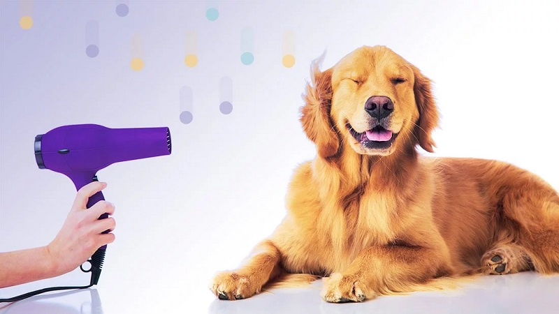 Pet Grooming Must-Haves To Do It By Yourself