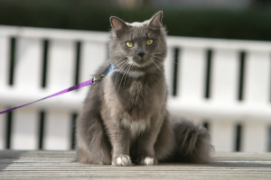 How to Choose the Right Cat Collar for Your Feline Friend