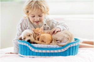 Keep Your Pets Healthy With Best Pet Product
