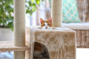 What Type of Furniture Should You Purchase to Make Your House Pet-Proof?