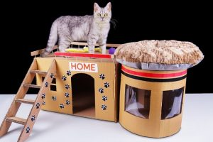 How To Build a Cat House on Your Own