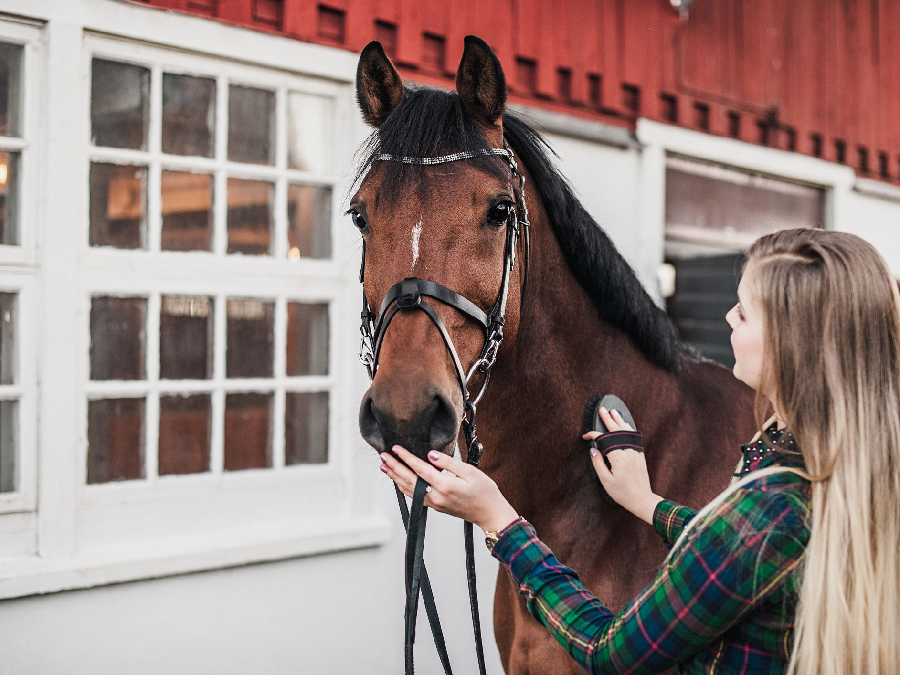 Costs to Consider When Buying Horses