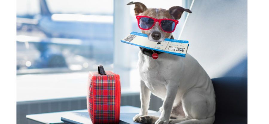 What To Do With Your Pet When You Go on Vacation