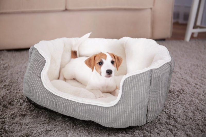 Types of dog beds: how to choose?