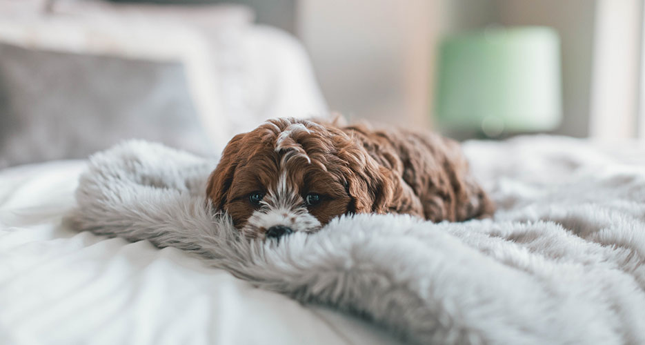 Things to consider before getting a new dog