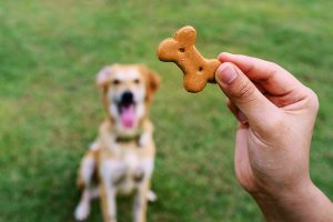 Know Your Pet Before Giving Him A Treat
