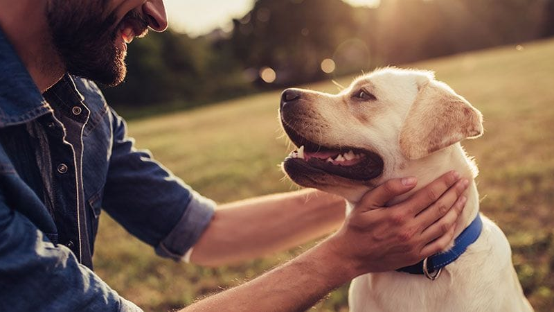 3 Simple Ways To Keep Your Dog Healthy and Happy