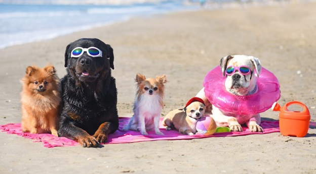 3 Questions to Ask Yourself Before Your Next Vacation With Your Pet