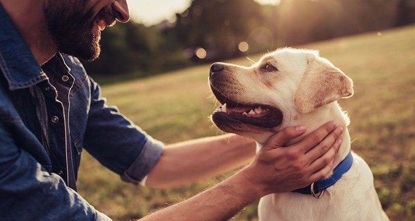 Keeping Your Dog Safe At The Park
