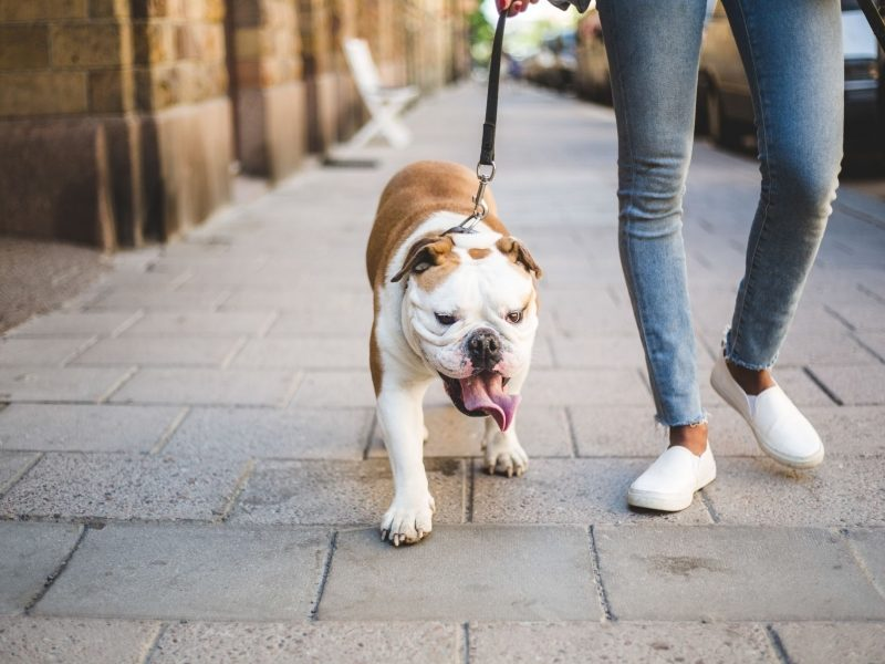 Best dog walkers in the USA