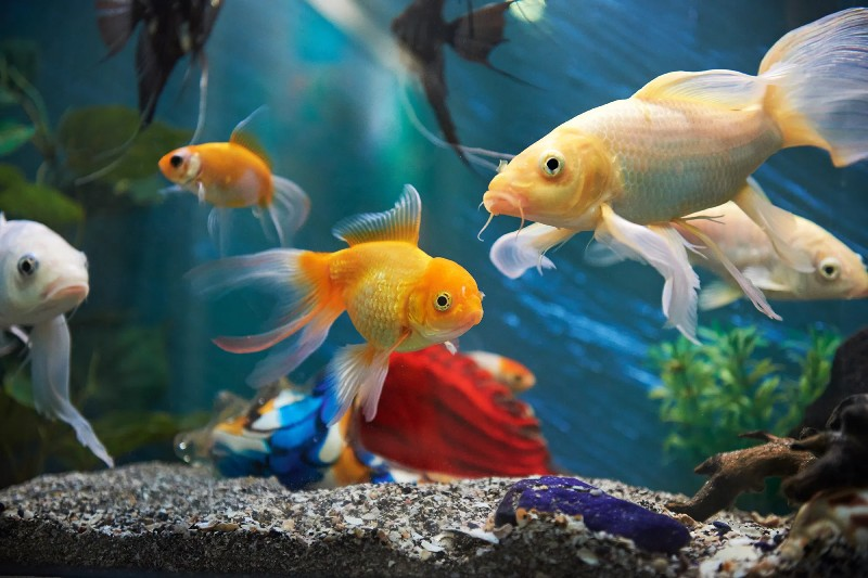 Essential Pet Fish Supplies You Will Need