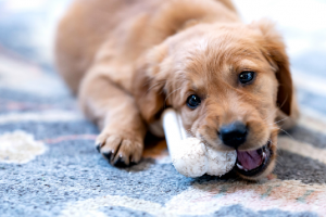 What Are The Right Dog Toys? – Some Useful Facts