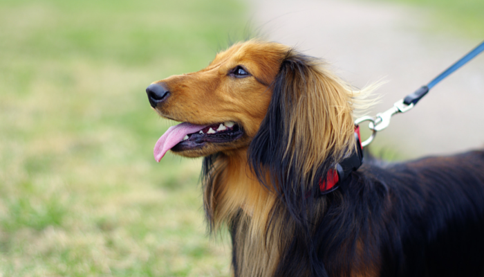 Right Outdoor Dog Gear – Doing Things in a Right Manner