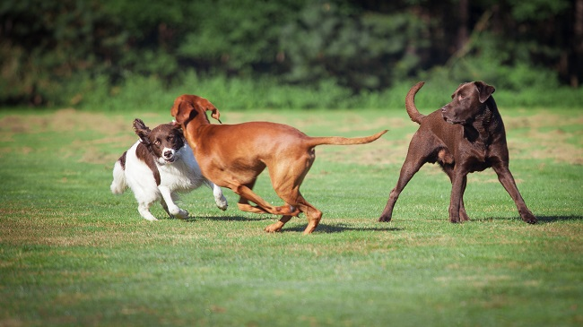 Is dog daycare good for socialization?