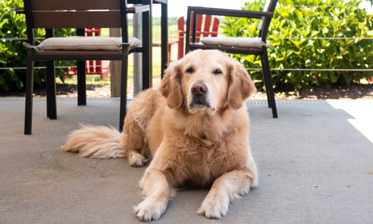 Change Your Life: Own a Pet from Long Island Pet Store