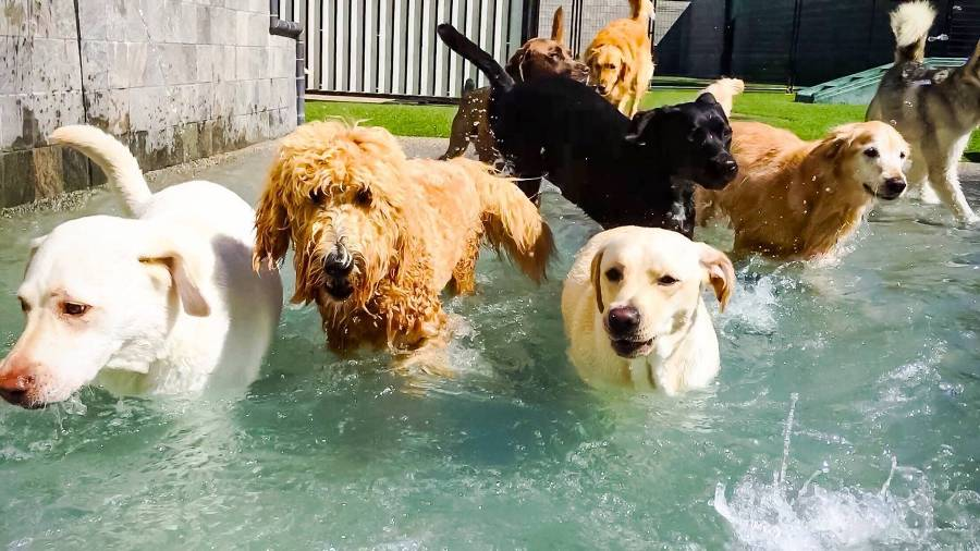 Does dog daycare help with socialization?