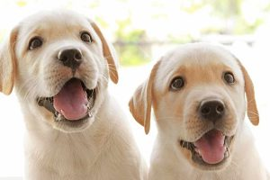 Is Your Garden Safe for Dogs?