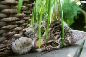 You Should Know About the Diet of Your Pet Cats
