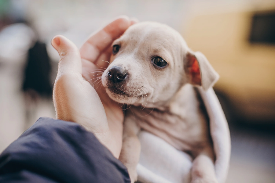 Pet Euthanasia Vs. Natural Death – Choose the Right Option for Your Pet