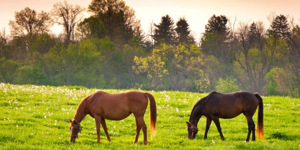 How To Take Care of Ranch Animals
