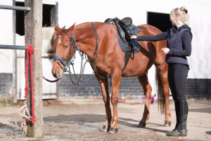 4 Ways To Save Money on Horse Care