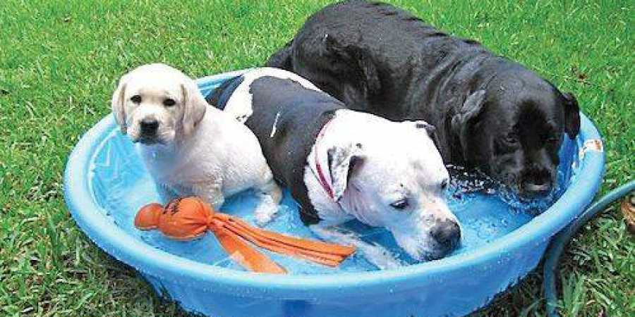 How to Keep Your Dogs Cool During Summer