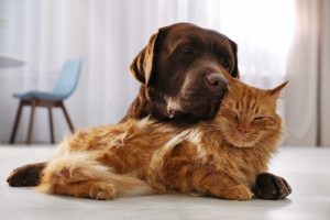 How You Can Select a Right Veterinary Clinic
