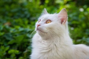 Tips for traveling with your cat