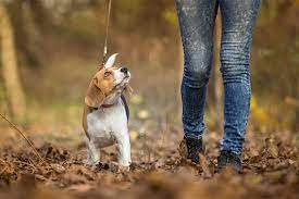 What is the right way to walk your dog?
