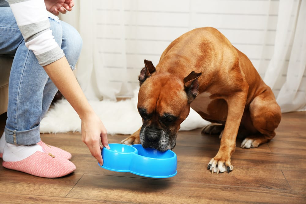 Tips On How To Properly Care For Your Pets