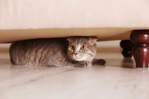 Tips to Keep Your Cat Calm During Scary Storms