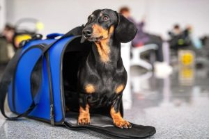 Pet carriers have many benefits: do you agree on this?