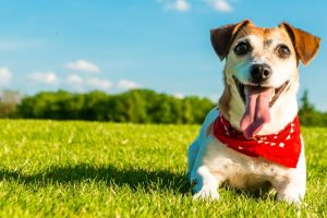 Making your Dog Maintain the Right Weight