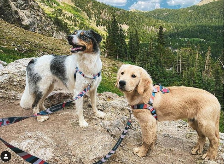 10 Smart Reasons for Keeping Your Dog on a Leash