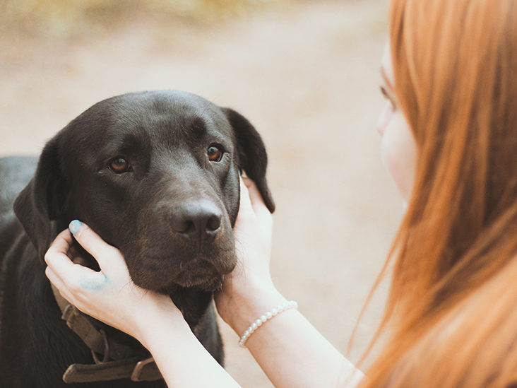 Different Ways To Handle the Loss of a Pet
