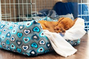 3 Tips for Taking Care of Puppies